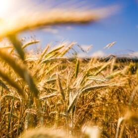 Tyske ZDF sætter fokus på teknologier, der kan reducere udledninger fra landbrug